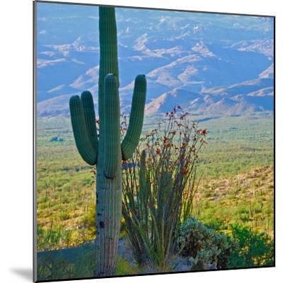 Saguaro Cactus in Saguaro National Park, Arizona,USA-Anna Miller-Mounted Photographic Print