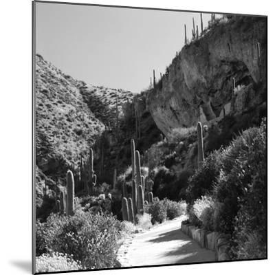 Cliff Dwellings of Tonto National Monument, Arizona,USA-Anna Miller-Mounted Photographic Print