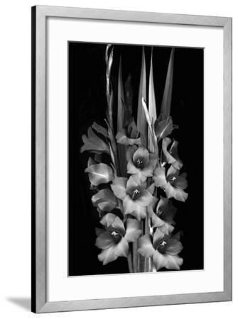 Gladiola Study-Anna Miller-Framed Photographic Print