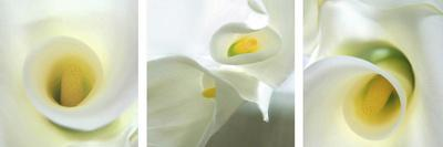 Calla Lily Triptych-Anna Miller-Framed Photographic Print