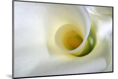 White Calla Lily Abstract-Anna Miller-Mounted Photographic Print