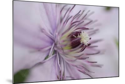 Clematis Flower Detail-Anna Miller-Mounted Photographic Print