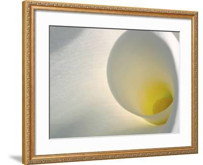 White Calla Lily Abstract-Anna Miller-Framed Photographic Print