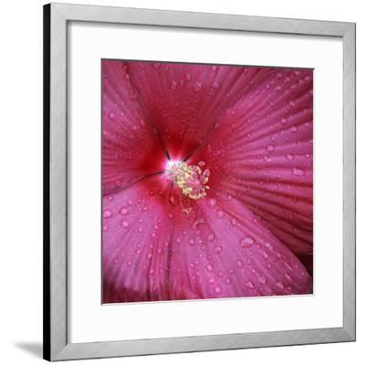 Red Hibiscus Abstract-Anna Miller-Framed Photographic Print