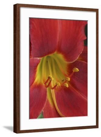 Red Lily Abstract-Anna Miller-Framed Photographic Print