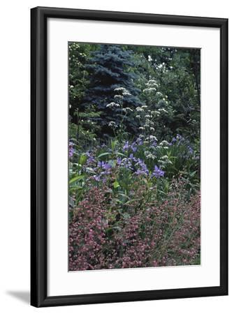 Garden View-Anna Miller-Framed Photographic Print
