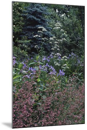Garden View-Anna Miller-Mounted Photographic Print