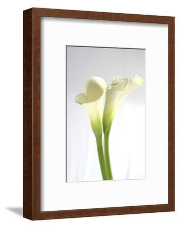 Calla Lily-Anna Miller-Framed Photographic Print