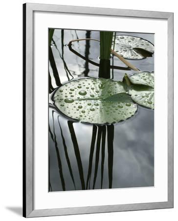 Water Lily Pond-Anna Miller-Framed Photographic Print