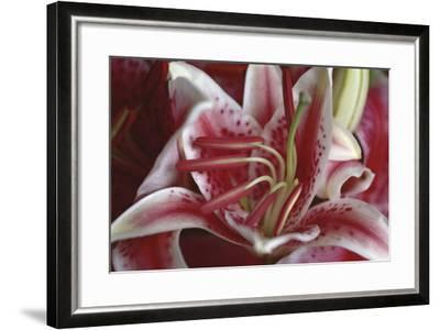 Stargazer Lily Abstract-Anna Miller-Framed Photographic Print