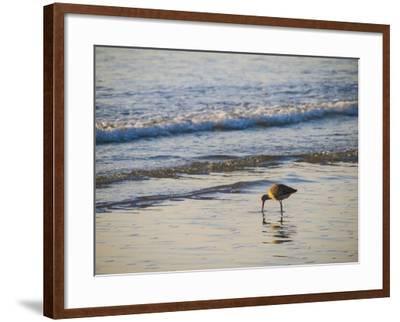 Coastal Bird, Morro Bay Coast-Anna Miller-Framed Photographic Print