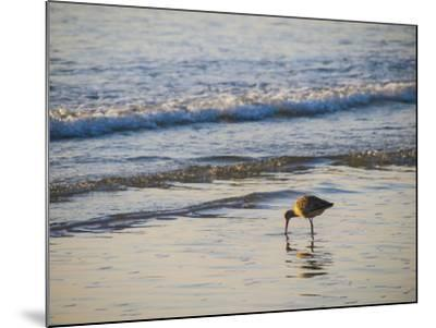 Coastal Bird, Morro Bay Coast-Anna Miller-Mounted Photographic Print