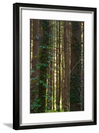 Treetrunks in Cataract Falls State Park forest, Indiana, USA-Anna Miller-Framed Photographic Print