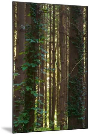 Treetrunks in Cataract Falls State Park forest, Indiana, USA-Anna Miller-Mounted Photographic Print