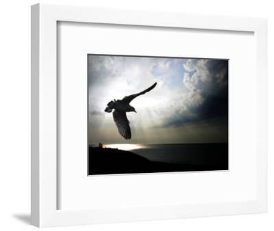 Seagul in flight over Lake Michigan beach, Indiana Dunes, Indiana, USA-Anna Miller-Framed Photographic Print