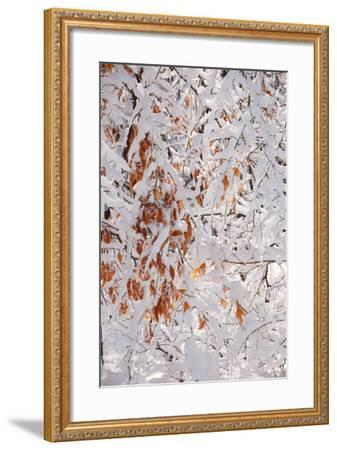 Winter in Eagle Creek Park, Indianapolis, Indiana, USA-Anna Miller-Framed Photographic Print