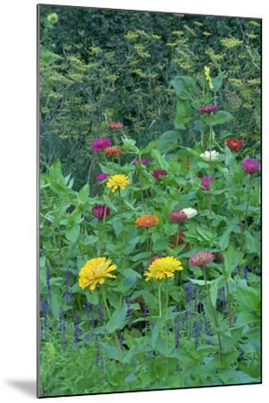 Garden views, Indianapolis gardens, Indiana, USA-Anna Miller-Mounted Photographic Print