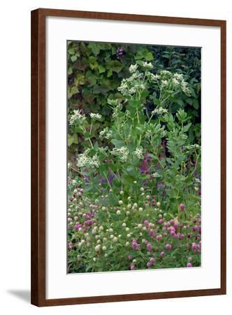 Garden views, Indianapolis gardens, Indiana, USA-Anna Miller-Framed Photographic Print