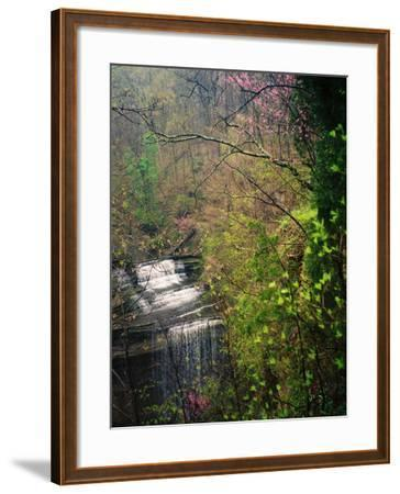 Spring in Clifty Creek State Park, Indiana, USA-Anna Miller-Framed Photographic Print
