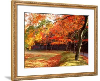 Maple Trees Near Villa Katsura--Framed Photographic Print