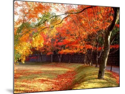 Maple Trees Near Villa Katsura--Mounted Photographic Print