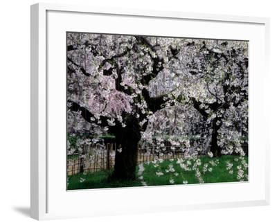 "Cool Retro Travel Poster *FRAMED* CANVAS ART Spring Kyoto Japan 16/""x12/"""