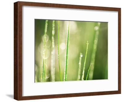 Morning Dew on Grass Leaves--Framed Photographic Print