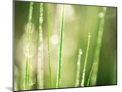 Morning Dew on Grass Leaves--Mounted Photographic Print