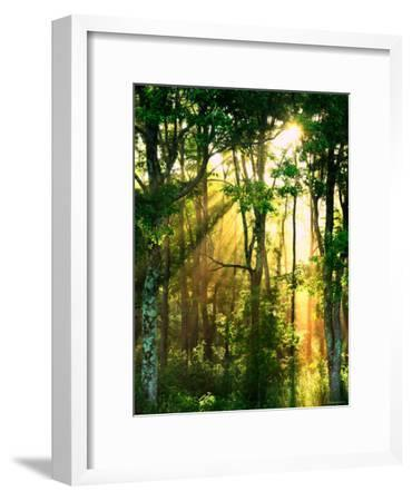 Sunbeams Through the Trees--Framed Photographic Print