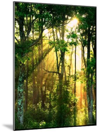 Sunbeams Through the Trees--Mounted Photographic Print