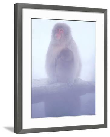 Mother and Baby Monkeys at Jigokudani Hot Spring, Nagano, Japan--Framed Photographic Print