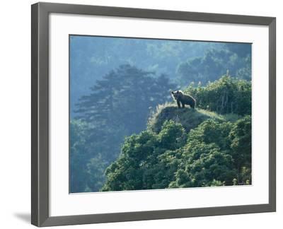 Brown Bear--Framed Photographic Print