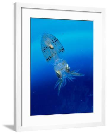 Baby Squid--Framed Photographic Print