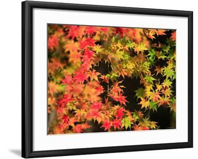 Autumn Leaves--Framed Photographic Print