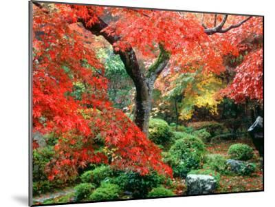 Garden with Maple Trees in Enkouin Temple, Autumn, Kyoto, Japan--Mounted Photographic Print