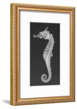 Dhiho'S Seahorse-Sandra J^ Raredon-Framed Photographic Print
