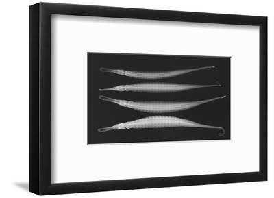 Alligator Pipefish-Sandra J^ Raredon-Framed Photographic Print