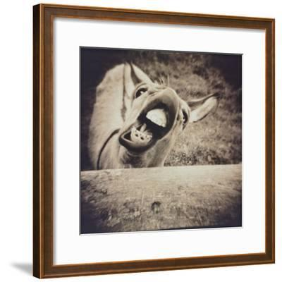 Bleating  Goat-Theo Westenberger-Framed Photographic Print
