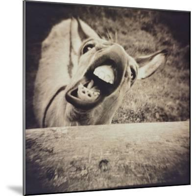 Bleating  Goat-Theo Westenberger-Mounted Photographic Print