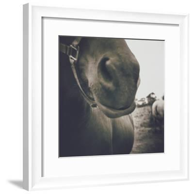 Looking a Gift Horse in the Mouth-Theo Westenberger-Framed Photographic Print