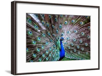 Wild Beauty II-Gail Peck-Framed Photographic Print