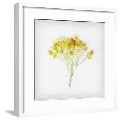 Meditative Yellow-Daniela Savone-Framed Photographic Print