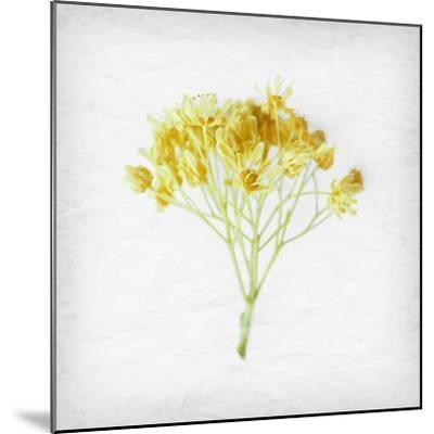 Meditative Yellow-Daniela Savone-Mounted Photographic Print