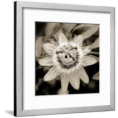 Blooming Flowers 5664-Rica Belna-Framed Photographic Print