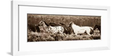 Sepia Horses-Gary Crandall-Framed Photographic Print