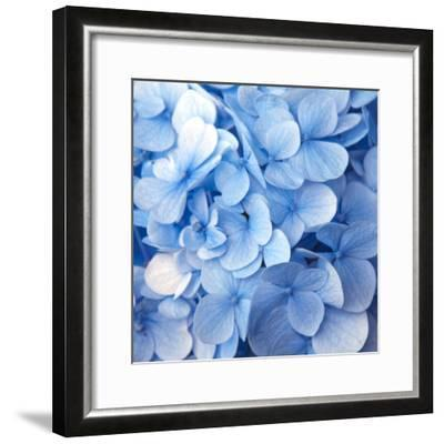 Blue Flowers--Framed Photographic Print
