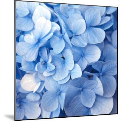 Blue Flowers--Mounted Photographic Print