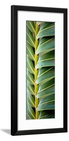 Palma I-Susan Bryant-Framed Photographic Print