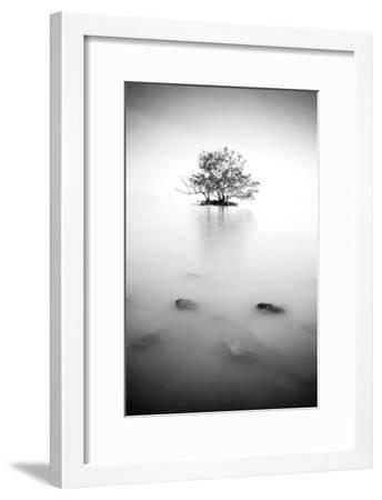 In the Mist--Framed Photographic Print