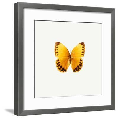 Yellow Butterfly-PhotoINC-Framed Photographic Print